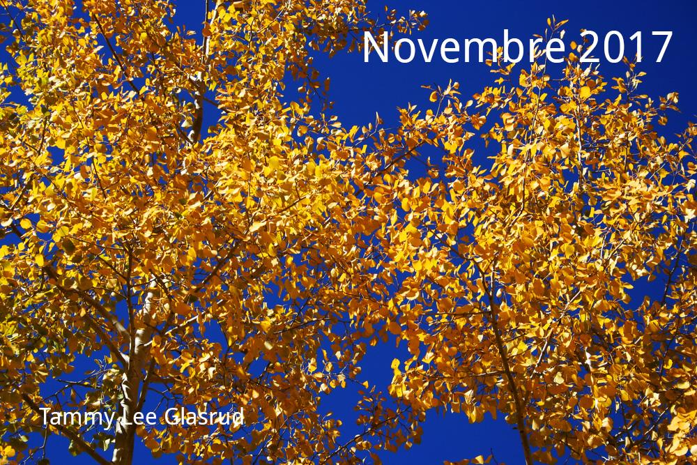 Novembre newsletter 2017